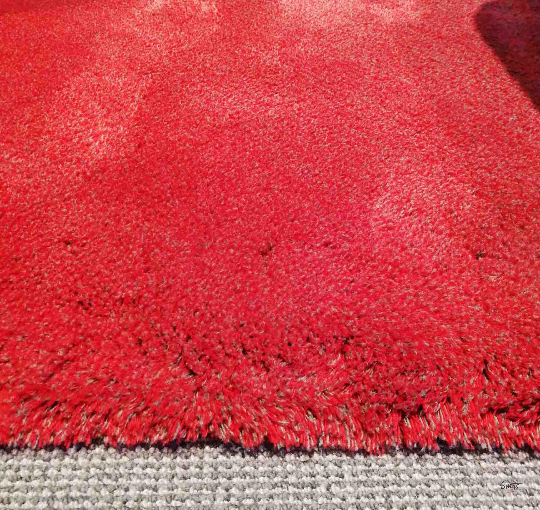 Showroom Carpet Sign Cameleon